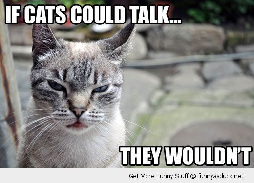 grumpy angry cat lolcat animal could talk wouldn't funny pics pictures pic picture image photo images photos lol