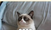 grumpy cat people unfriended you lolcat animal good funny pics pictures pic picture image photo images photos lol