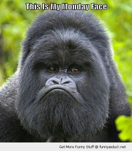 Angry baboon face - photo#16