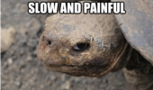your death slow grumpy angry turtle animal funny pics pictures pic picture image photo images photos lol