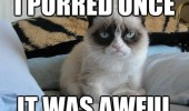 grumpy angry cat animal purred once was awful bed funny pics pictures pic picture image photo images photos lol