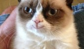 grumpy cat smiling excellent human pleases me animal lolcat funny pics pictures pic picture image photo images photos lol
