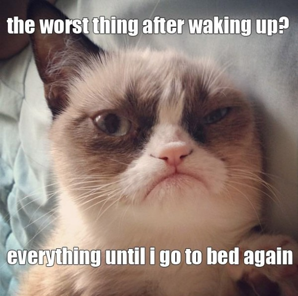 grumpy angry cat lolcat animal worst thing everything funny pics pictures pic picture image photo images photos lol
