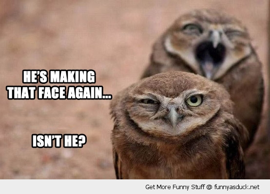 grumpy owl bird face bird again isn't he animal funny pics pictures pic picture image photo images photos lol