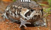 angry grumpy toad frog parked car animal pun joke funny pics pictures pic picture image photo images photos lol