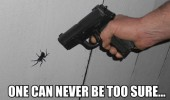 never be too careful spider insect gun shoot funny pics pictures pic picture image photo images photos lol