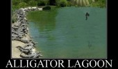 alligator lagoon bay animals guy parachute oh shit  funny pics pictures pic picture image photo images photos lol