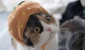 cat halloween costume pumpkin hat shocked mirror lolcat funny pics pictures pic picture image photo images photos lol