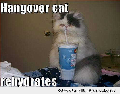hangover cat drinking straw fast food cup animal lolcat funny pics pictures pic picture image photo images photos lol