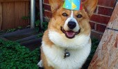 happy birthday dog animal party hat rolling grass funny pics pictures pic picture image photo images photos lol