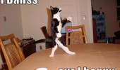 cat dancing on table happy animal lolcat funny pics pictures pic picture image photo images photos lol