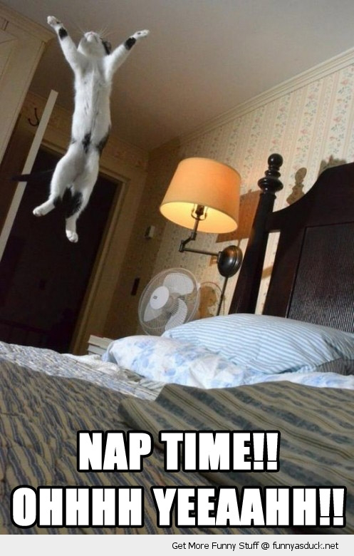 happy cat lolcat animal jumping bed nap time yeah funny pics pictures pic picture image photo images photos lol