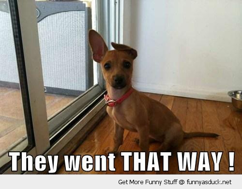 went that way dog animal pointing ear cute funny pics pictures pic picture image photo images photos lol