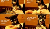 dog happy animal chihuahua tiny little hand funny pics pictures pic picture image photo images photos lol