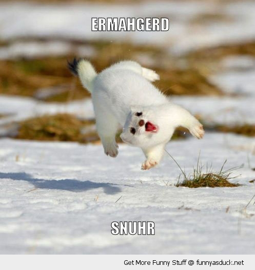 ermahgerd snuhr happy ferret weasel animal running snow crazy mad funny pics pictures pic picture image photo images photos lol