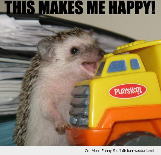 happy little hedgehog toy car animal funny pics pictures pic picture image photo images photos lol