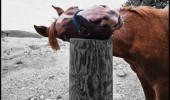 love this post happy horse smiling animal head funny pics pictures pic picture image photo images photos lol