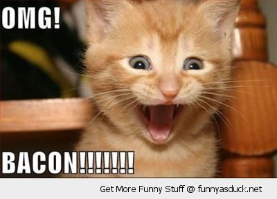 happy mad crazy smiling cat kitten animal lolcat omg bacon funny pics pictures pic picture image photo images photos lol