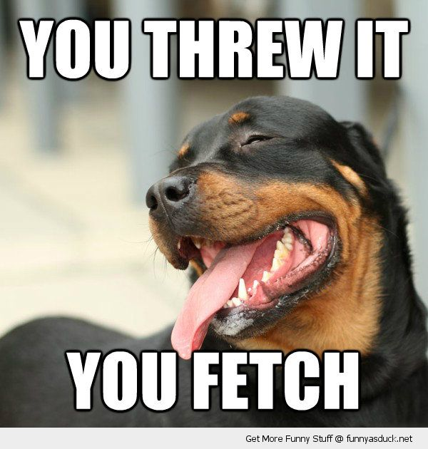 happy dog animal smiling you threw it fetch sticking tongue funny pics pictures pic picture image photo images photos lol