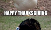 happy thanksgiving america holiday usa fuck you chicken turkey animal gobble funny pics pictures pic picture image photo images photos lol