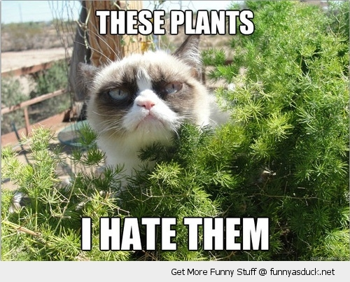 i hate these plants angry grumpy cat bush animal lolcat funny pics pictures pic picture image photo images photos lol