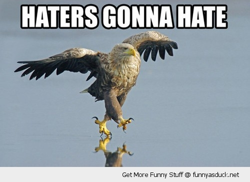 haters gonna hate eagle bird walking ice animal funny pics pictures pic picture image photo images photos lol