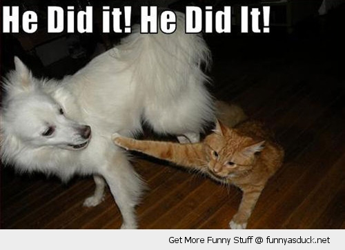 he did it pointing cat lolcat animal dog angry funny pics pictures pic picture image photo images photos lol