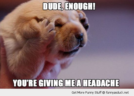 dude enough cute headache dog puppy paws hands ears face funny pics pictures pic picture image photo images photos lol