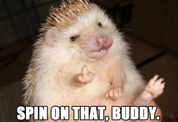 spin on that hedgehog animal fuck you finger up middle grumpy angry funny pics pictures pic picture image photo images photos lol