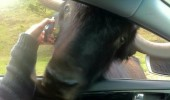 hello dog yak animal car phone funny pics pictures pic picture image photo images photos lol
