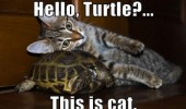 hello turtle this is cat head ear shell animal funny pics pictures pic picture image photo images photos lol