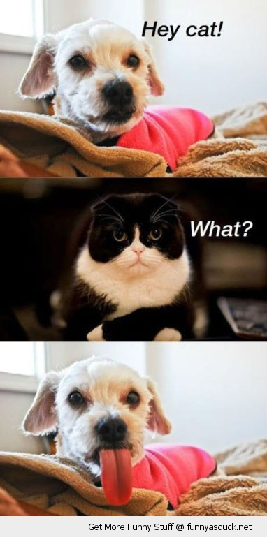 hey cat what dog animal sticking out tongue grumpy angry funny pics pictures pic picture image photo images photos lol