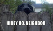 hidey ho neighbor dog looking over fence animal funny pics pictures pic picture image photo images photos lol