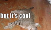 high cat animal lolcat catnip lying floor funny pics pictures pic picture image photo images photos lol