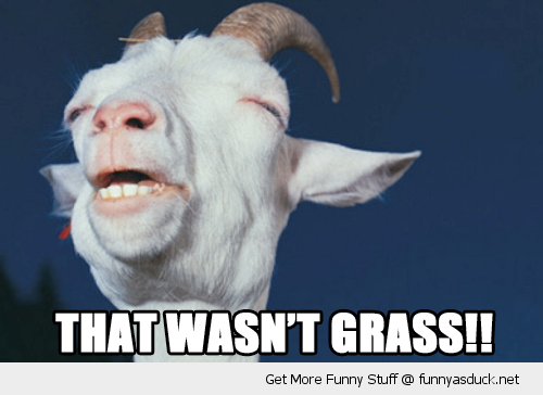 that wasn't grass high stoned wasted goat animal farm face funny pics pictures pic picture image photo images photos lol