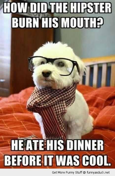 hipster dog meme glasses scarf animal cute burn mouth ate before cool funny pics pictures pic picture image photo images photos lol