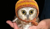hoot motherfucker cute baby owl hat animal bird funny pics pictures pic picture image photo images photos lol