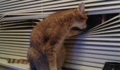 creepy pervert cat animal lolcat window take bath dirty bird funny pics pictures pic picture image photo images photos lol