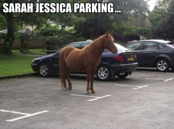 sarah jessica parker horse animal parking lot car funny pics pictures pic picture image photo images photos lol