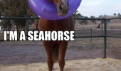 horse rubber ring snorkel flippers animal seahorse argument invalid funny pics pictures pic picture image photo images photos lol