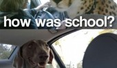 how was school leopard car dog back seat who are you animals funny pics pictures pic picture image photo images photos lol