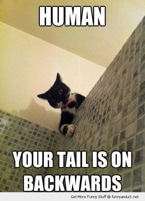 human tail backwards cat lolcat animal shower funny pics pictures pic picture image photo images photos lol