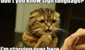 hungry cat animal lolcat sign language starving here sad funny pics pictures pic picture image photo images photos lol