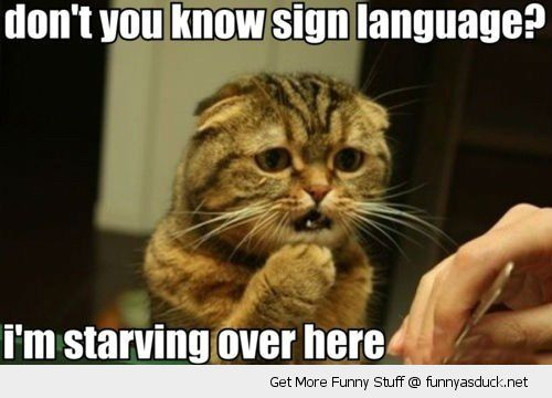 hungry cat animal lolcat sign language starving here sad funny pics    I Am Starving Meme