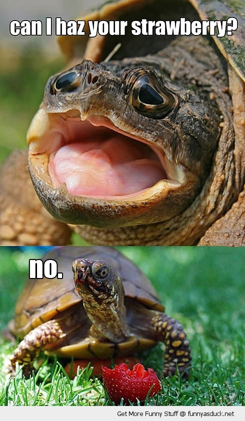 hungry sad cute turtle strawberry animal no angry funny pics pictures pic picture image photo images photos lol