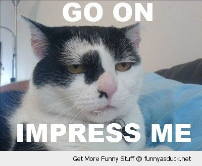 go on impress me cat lolcat animal bored skeptical funny pics pictures pic picture image photo images photos lol