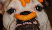 incogcheeto dog animal chips crisps cheetos wotsits eyebrows mustache funny pics pictures pic picture image photo images photos lol