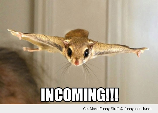 incoming flying squirrel animal funny pics pictures pic picture image photo images photos lol