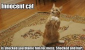 innocent cat shocked offended standing up animal lolcat funny pics pictures pic picture image photo images photos lol