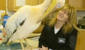 see what you did there pelican bird vet animal funny pics pictures pic picture image photo images photos lol